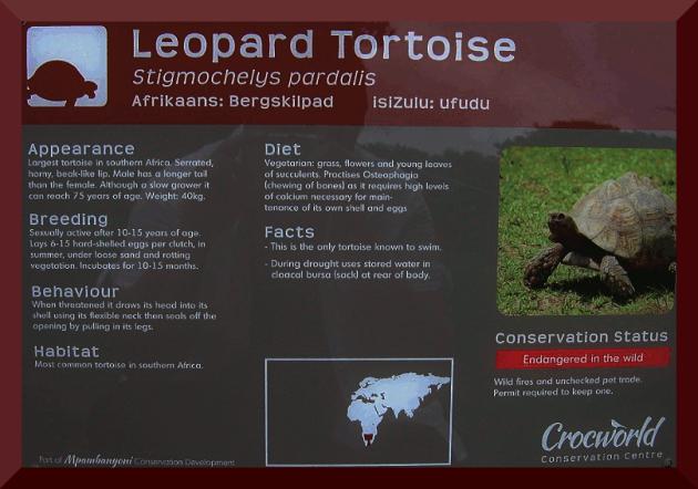 TortoiseInfo