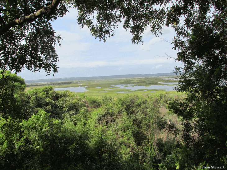 Isimangaliso Wetlands Park Western Bank